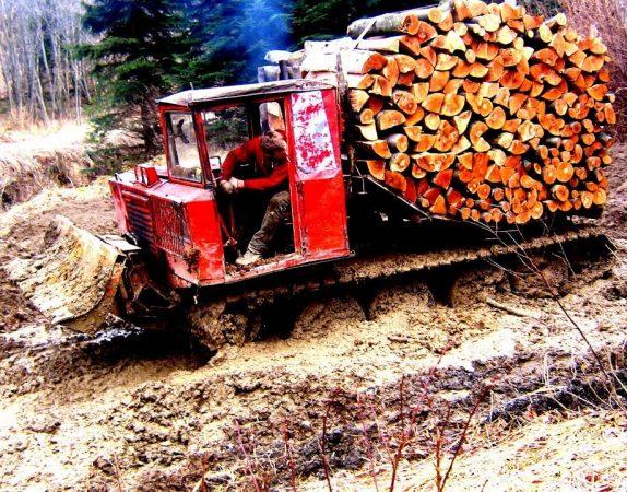 Работа трактора ТДТ-55 в лесу