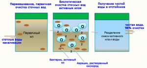 Принцип работы бактерий для септиков Доктор Робик