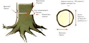 Валка леса бензопилой - схема