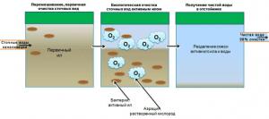 Принцип бактериальной чистки выгребной ямы
