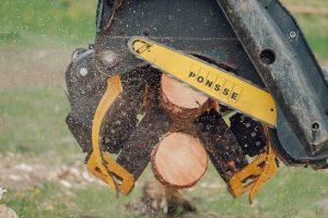 Процесс заготовки леса