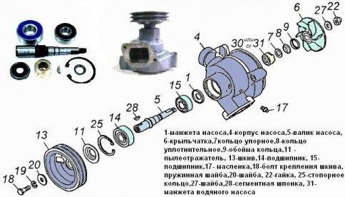 Устройство насоса охлаждающей жидкости двигателя Камаз-740